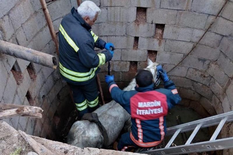 Kızıltepe'de foseptik çukuruna düşen at kurtarıldı