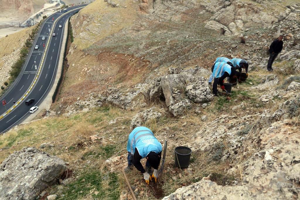 Mardin'de palamut ve mazı meşesi seferberliği