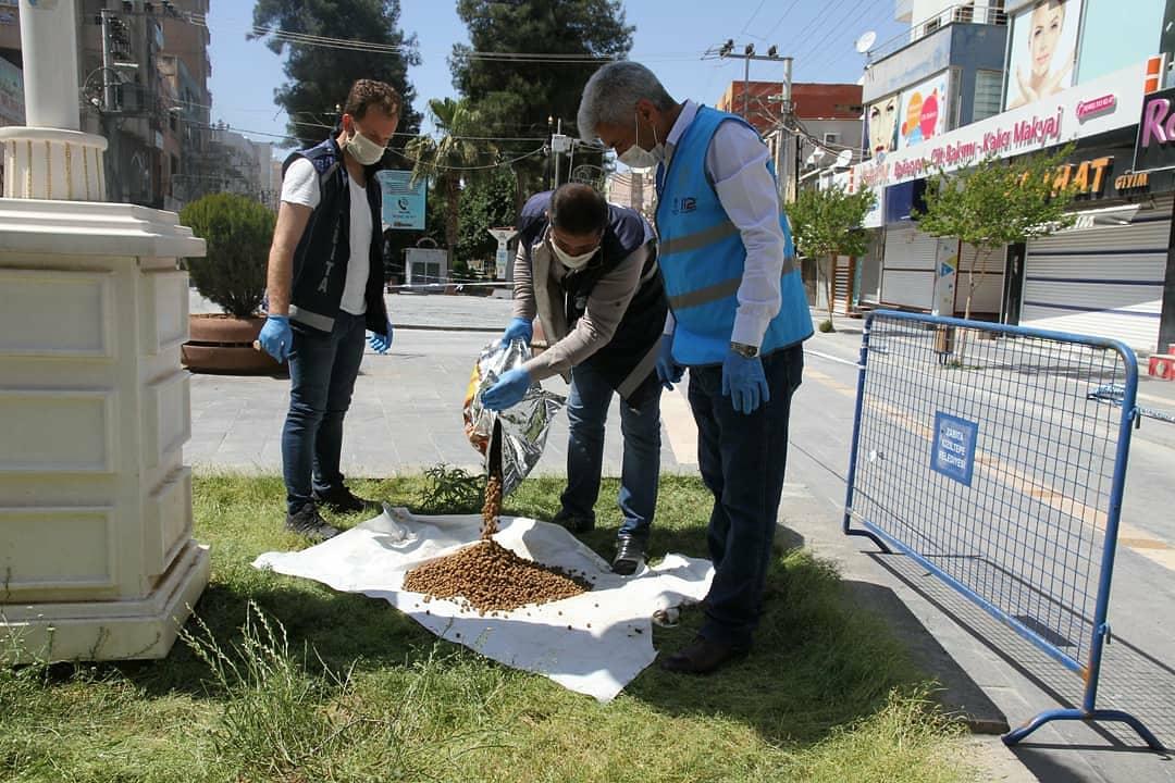 Kızıltepe'de sokağa çıkma kısıtlamasında sokak hayvanları unutulmadı