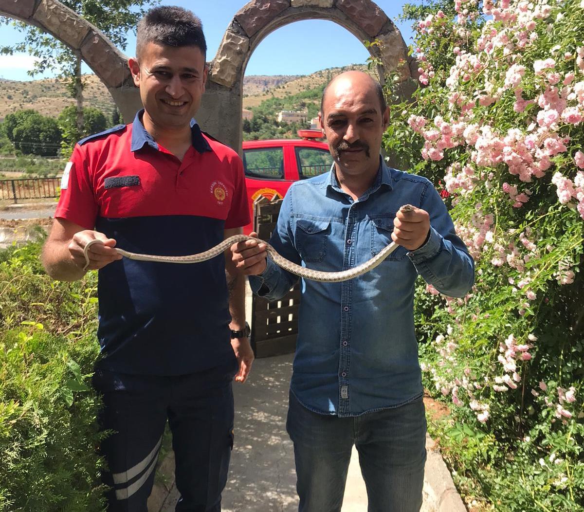 Mardin'de eve giren yılan korkuttu