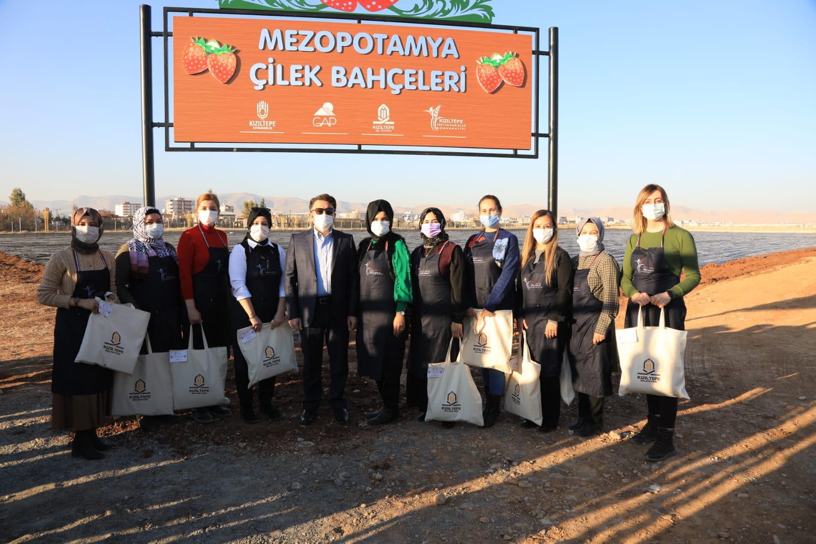 Kızıltepe'de kooperatif kuran kadınlar 20 dönümde çilek üretecek