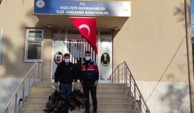 Kızıltepe'de kümes hırsızları, 27 kamera incelenerek yakalandı