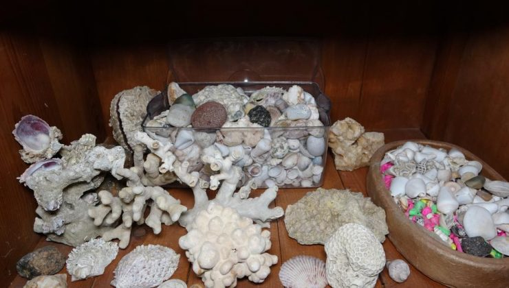 Denizin bulunmadığı Mardin'de, binlerce yıllık fosiller sergileniyor