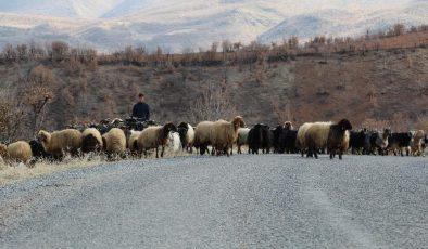 Siirt'te göçerlerin zorlu yaşamı
