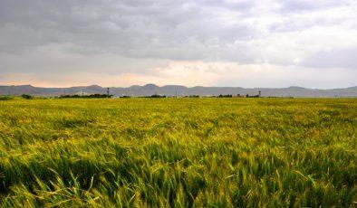 Mardin'de yağış 2021 yılında 2020 yılana göre 3 kat azaldı
