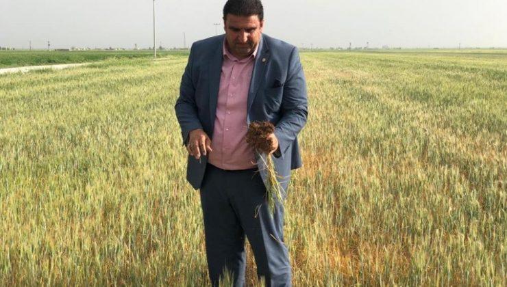 Mardin'de çiftçilerin kuraklık çığlığı