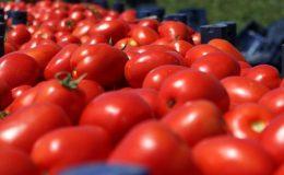 Bölgede fiyatı en fazla artan ürün domates oldu