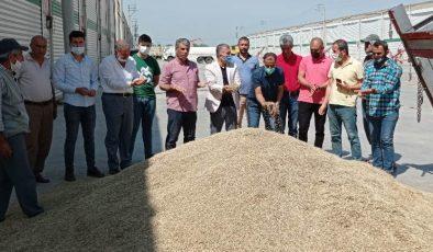 Mardin'de 70 verim kaybı yaşanan Arpa'nın kilosu 2 lira 5 kuruştan satıldı