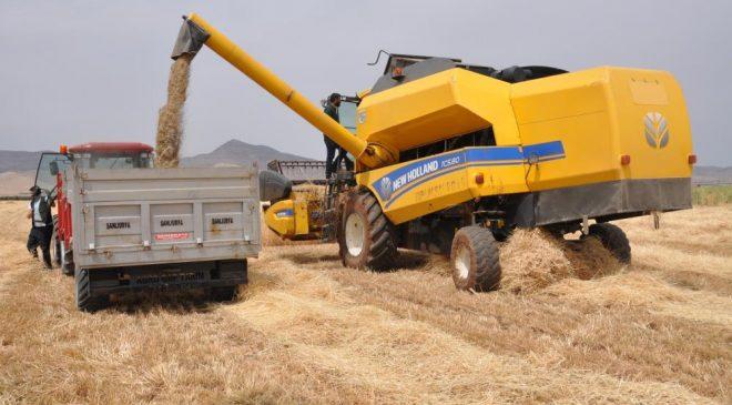 Mardin'de sezonun ilk buğdayında verim 30 dönümde 2 ton olarak gerçekleşti
