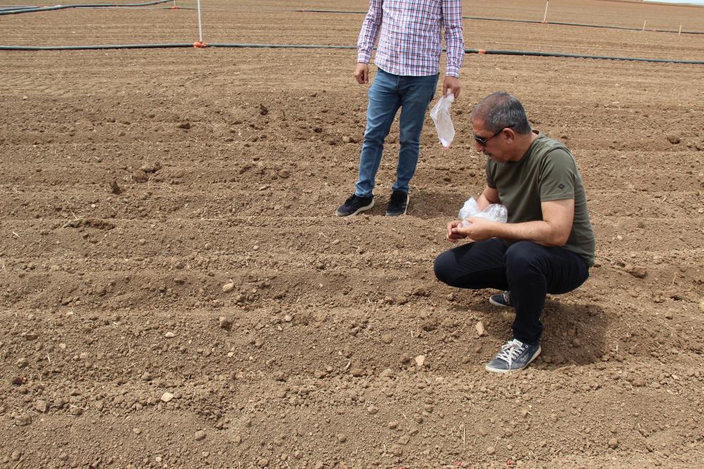 Mardin'de alternatif olarak yer fıstığı yetiştirilmesi için çalışmalar başladı