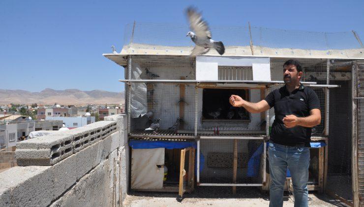 Bulgaristan'dan havalanan posta güvercinleri Kızıltepe'ye ulaştı