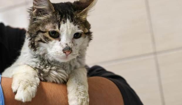 ABD'de kedileri aç bırakıp işkence eden kişiye hapis cezası!